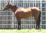 AQHA Quarter Horses for sale