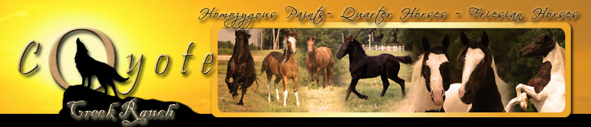 Paint+horses+for+sale+in+texas